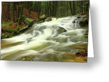 Buffam Brook Cascades Greeting Card