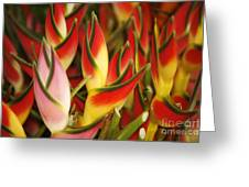 Bunch Of Heliconia Greeting Card