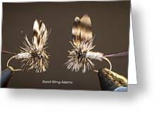 Burnt Wing Adams Greeting Card