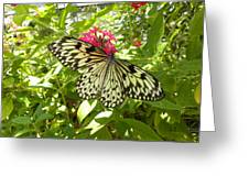 Butterfly-1 Greeting Card