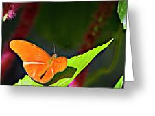 Butterfly 22 Greeting Card