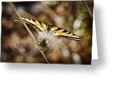 Butterfly Greeting Card by Kelley King