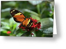 Long Winged Beauty Greeting Card