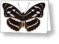 butterfly species Athyma reta moorei Greeting Card