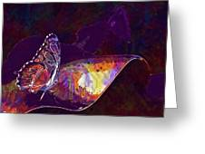 Butterfly Wings Insect Nature  Greeting Card