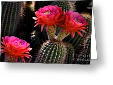 Sonoran Spring Greeting Card