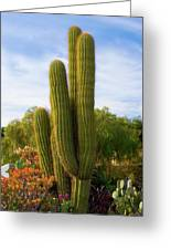 Cactus Monterey California Greeting Card