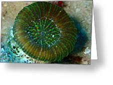 Cactus Ring Coral Greeting Card