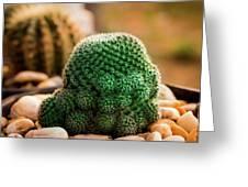 Cactus  Greeting Card