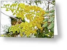 Caesalpinia Cacalaco In Huntington Desert  Gardens In San Marino-california  Greeting Card