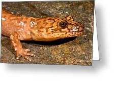California Giant Salamander Greeting Card