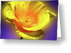 Californian Poppy. Greeting Card