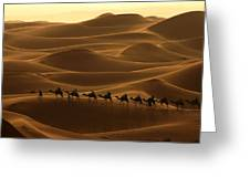 Camel Caravan In The Erg Chebbi Southern Morocco Greeting Card