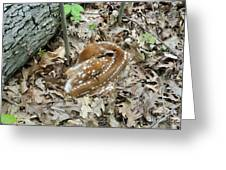 Camouflaged Fawn Greeting Card