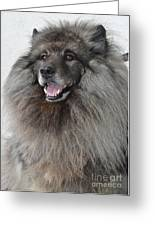 Canine Beauty Greeting Card