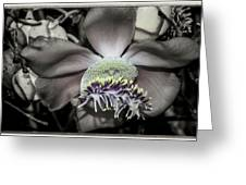 Cannonball Flower Greeting Card