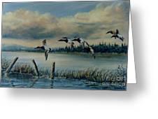 Canvasbacks Over Lake Earl Greeting Card