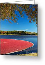 Cape Cod Cranberry Bog Greeting Card