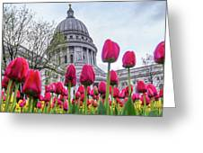 Capitol Tulips Greeting Card