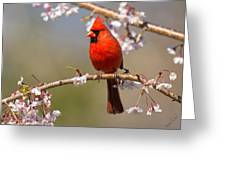 Cardinal In Cherry Greeting Card