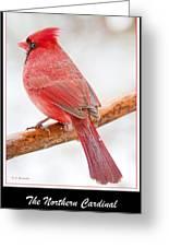 Cardinal Male In Winter Greeting Card