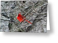 Cardinal On Icy Branches Greeting Card