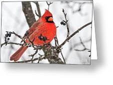 Cardinal Red Greeting Card