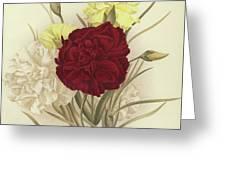 Carnations Greeting Card