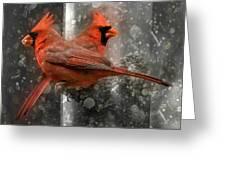 Cary Carolina Cardinals  Greeting Card