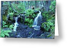 Cascade Creek And Ferns  Greeting Card