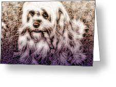 Cassie Girl Greeting Card