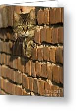Cat On A Brick Wall Greeting Card