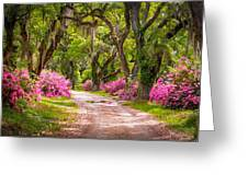 Catalpa Alley Greeting Card