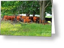 Cattle Herd Greeting Card