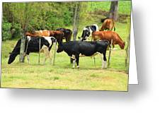 Cattle In A Pasture Greeting Card