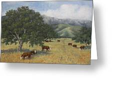 Cattle Greeting Card by Marv Anderson