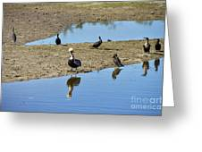Center Of Attraction Greeting Card