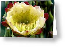 Cereus Cactus Flower Greeting Card