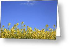 Champs De Colza Greeting Card