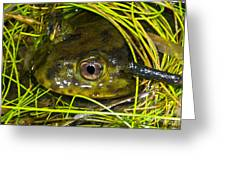Chilean Widemouth Frog Greeting Card