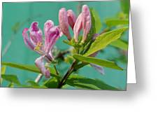 Chinese Honeysuckle  Greeting Card