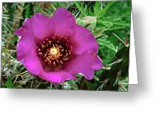 Cholla Cactus Flower Greeting Card