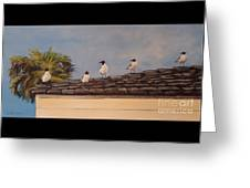Cinco Seagulls Greeting Card