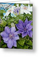 Clematis 2 Greeting Card