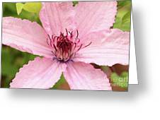 Clematis Hagley Hybrid Greeting Card