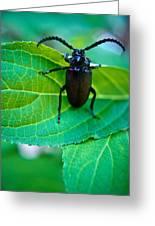 Climbing Beetle Greeting Card