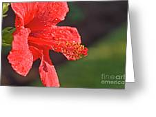 Close Up Of A Red Hibiscus Greeting Card