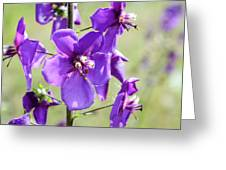 Close Up Of Verbascum Phoeniceum Greeting Card
