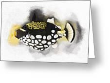 Clown Triggerfish No 01 Greeting Card