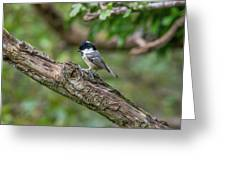 Coal Tit Greeting Card